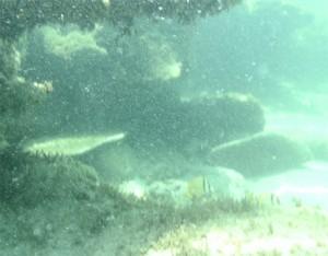 Undersea vista