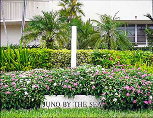 Juno by the sea real estate condos