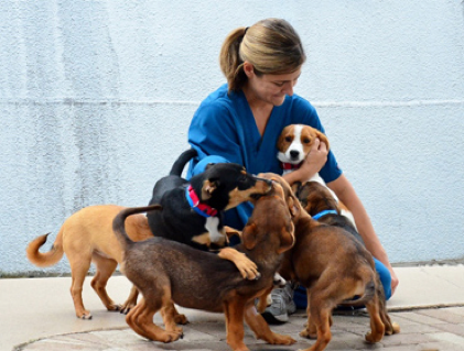 West Palm Beach Spotlight: Peggy Adams Animal Rescue
