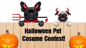 Echo's 1st Annual Halloween Pet Photo Costume Contest