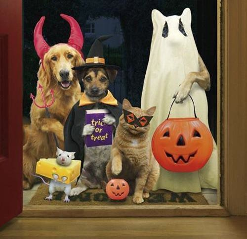 Howl-O-Ween Pet Contest